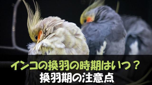 インコ 換羽