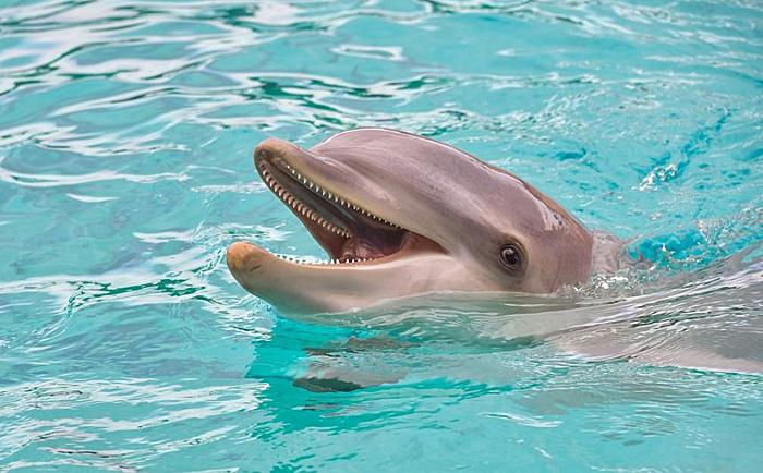 イルカ クジラ 違い